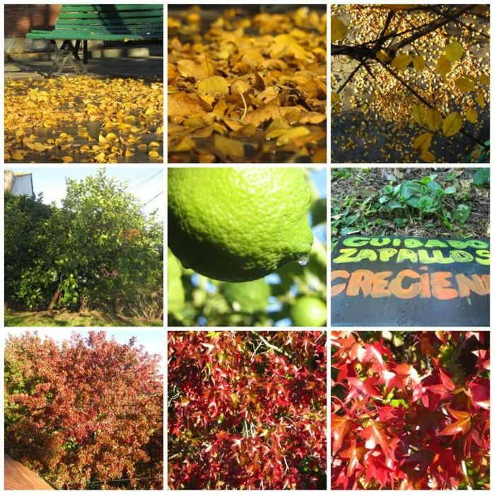 Art House* Lemon Tree: READY!!!!